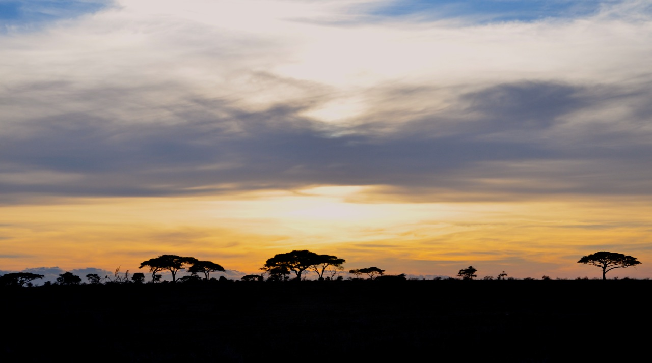 Africa & the Serengeti