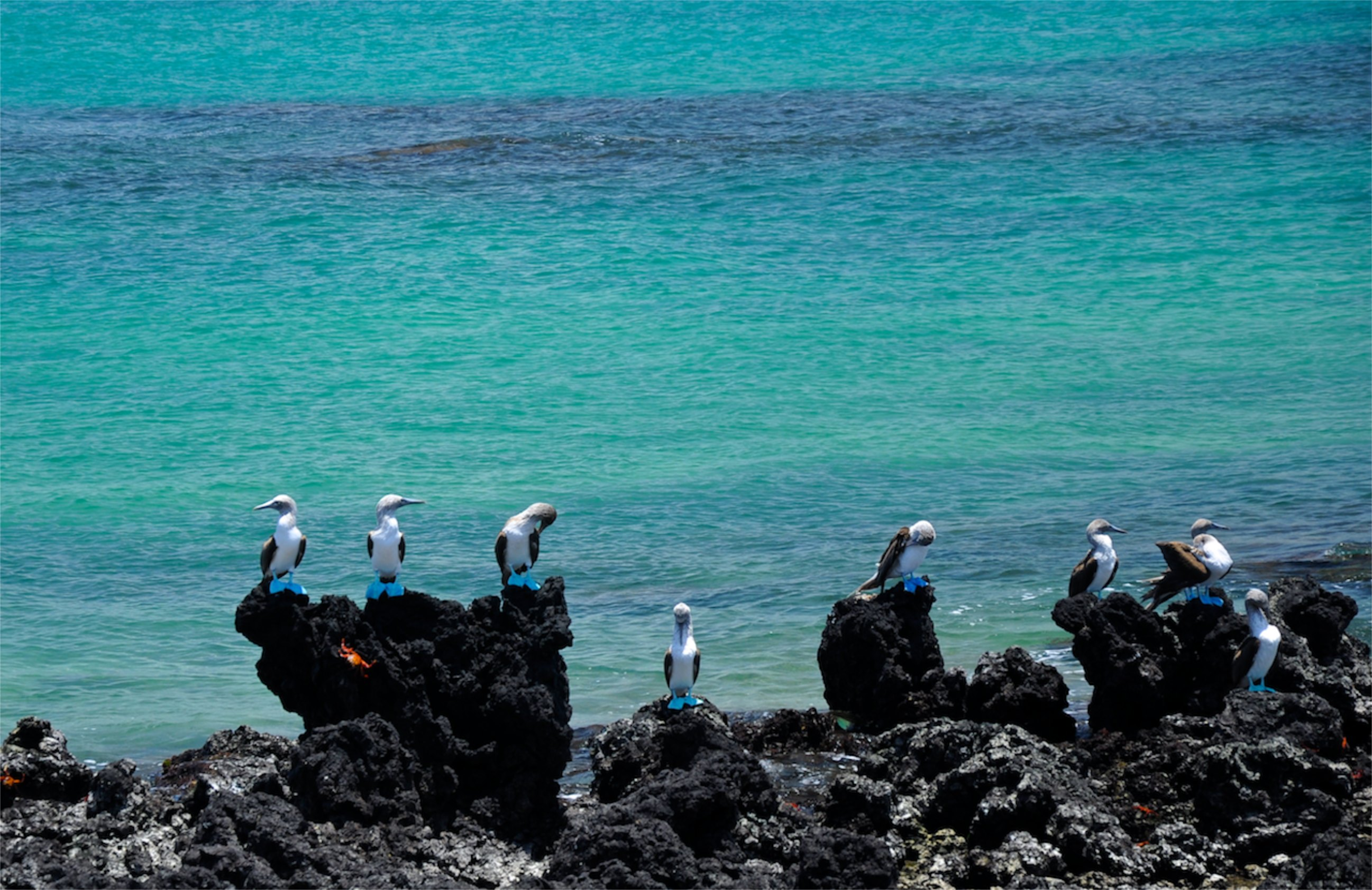 An 8 day mission to the Galapagos