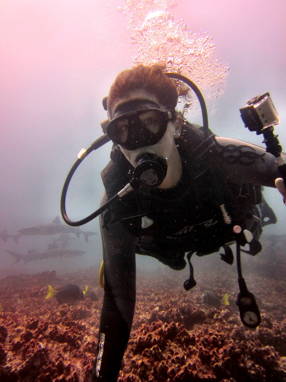 Swimming with Sharks: Diving in the Galapagos