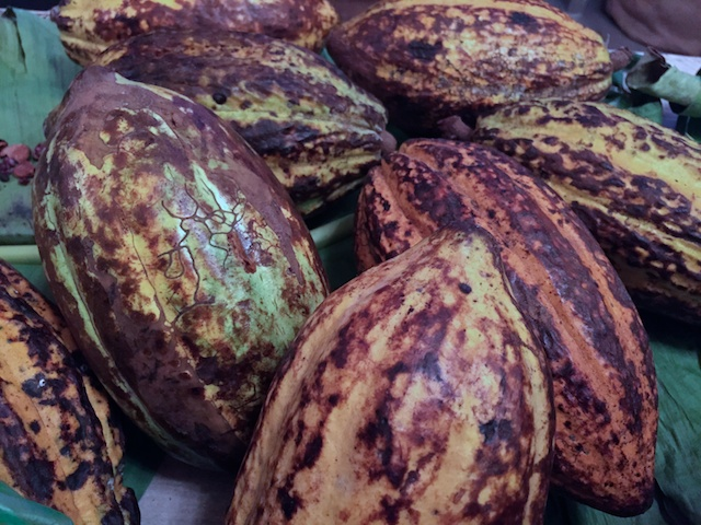 Cacao/Cocoa Beans
