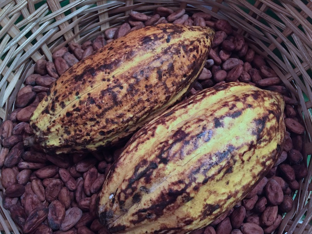 Cacao/Cocoa pods / roasted beans